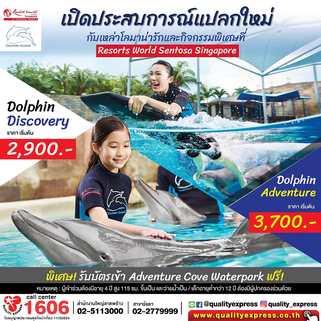เปิดประสบการณ์แปลกใหม่ Dolphin Island